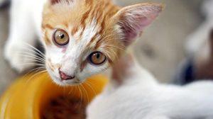 Assurance animaux : Aliments thérapeutiques pour chiens et chats, 60 ans d'expertise