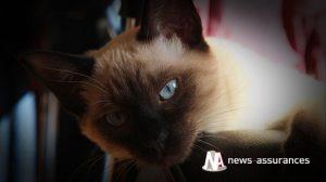 Assurance santé animale : comme réagir au coup de chaleur chez le chien ou le chat