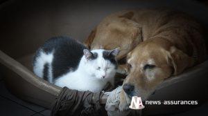 Santé animale : les Français gèrent mal l'hydratation de leurs chiens et chats !
