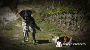Santé animale : un cas de chien enragé détecté dans la Loire