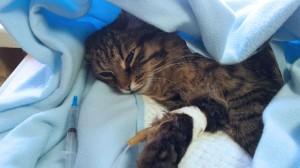 Assurance santé animale : Pourquoi protéger son compagnon contre la rage ?
