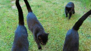 Assurance santé animale : ne pas sous-estimer les griffures de chat