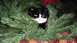 Assurance santé animale : les dangers des fêtes de fin d'année