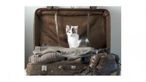 Assurance santé animale : les Français organisent leurs vacances avec leur chien et chat