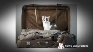 Bien-être animal : comment voyagent les maîtres de chiens et chats européens ?