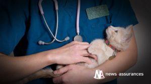 Santé animale : quelle couverture pendant la garde du chien ou du chat ?