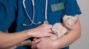 Assurance santé animale : Des tests ADN de plus en plus pratiqués chez les chiens et chats
