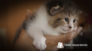Assurance santé animale : le typhus du chat, une maladie très contagieuse