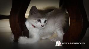 Santé animale : préparer l'arrivée du chiot ou du chaton