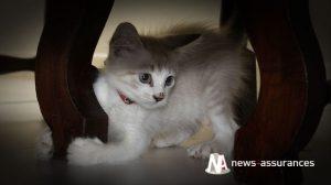 Assurance santé animale : vivre harmonieusement avec son chat