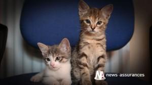 Assurance-animaux : toutes les maladies sont-elles couvertes?