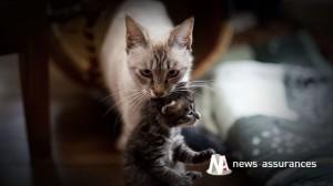 Santé animale : prendre soin de son chien ou chat au printemps