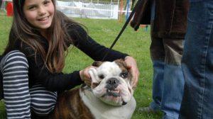 Assurance santé animale : L'homéopathie vétérinaire peut être remboursée