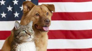Assurance animale : Chiens et chats vont changer de peau !