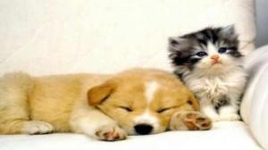 Assurance animale : Reconnaître les signes de maladie chez le chien et le chat
