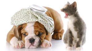 Assurance Animale : Seuls 4% des animaux domestiques sont assurés en France