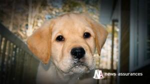 Assurance santé animale : laver son chien ou chat, une question de fréquence