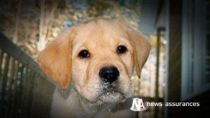 Santé animale : les chiens préférés des Français en 2015