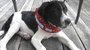 Assurance animale : Carcan, un accessoire remboursé