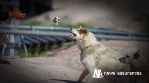 Assurance santé animale : quel intérêt pour l'évaluation comportementale ?