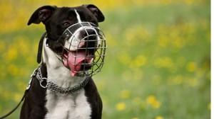 Assurance animaux: Le Maroc veut interdire les chiens dits «dangereux»