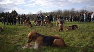 Assurer des chiens de chasse