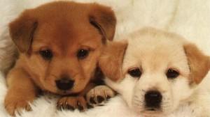 Assurance animaux : Chien de race, mode d'emploi