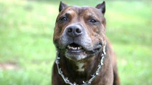 Assurance animaux : Morsures, des statistiques qui restent vagues