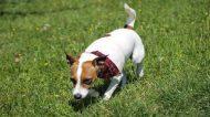 Assurance santé animale : Escargots et limaces, un danger potentiel pour le chien