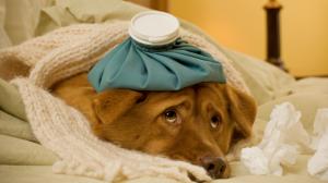 Assurance santé animale : Pourquoi l'observance thérapeutique doit-elle être respectée ?