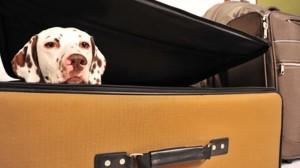 Assurance santé animale : comment les maîtres organisent les vacances avec leurs chiens ?