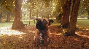 Assurance santé animale : prévenir les risques liés aux tiques chez le chien et chat
