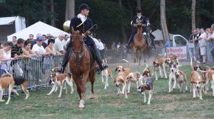 Assurance santé animale : La maladie d'Aujeszky chez le chien