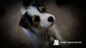 Assurance santé animale : moustiques tigres et insectes peuvent aussi être dangereux pour le chien et chat