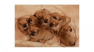 Assurance animale : Vers une gestion responsable des populations canines en Europe