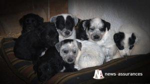 Santé animale : gérer l'alimentation de la chienne allaitante et de ses bébés