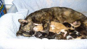 Assurance santé animale : Gestation et mise bas, quelle prise en charge ?
