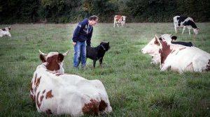Assurance agriculteurs : La MSA répond aux questions retraites lors d'un tchat
