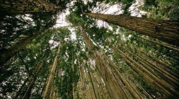 Assurances et écologie