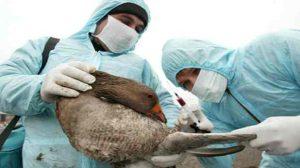 Prévention / Santé : La grippe aviaire refait son apparition à Hong Kong, un garçonnet de deux ans dans un état grave