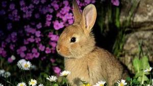 Assurance santé animale : un lapin domestique pour animal de compagnie