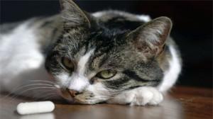 Animaux : Préparer aussi la rentrée de son chien ou chat