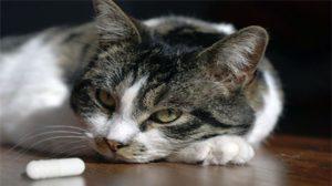 Assurance santé animale : Les anti-inflammatoires ne sont pas anodins