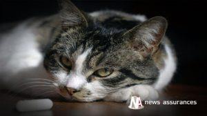 Santé animale : prévenir la transmission de la toxoplasmose du chat à l'homme