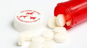 Assurance santé animale : L'œdème de Quincke chez le chien et le chat