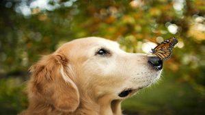 Pourquoi souscrire une assurance pour votre chien ?