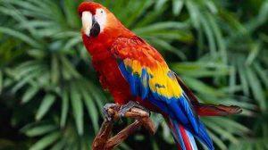 Assurance animale : Aspergillose, une maladie grave chez le perroquet