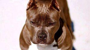 Une assurance responsabilité civile pour les accidents causés par le chien