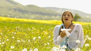 Prévention Santé : Alerte rouge aux pollens d'ambroisie dans 4 départements