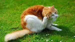Assurance santé animale : 47 % des chats européens infestés par des vers ou des parasites